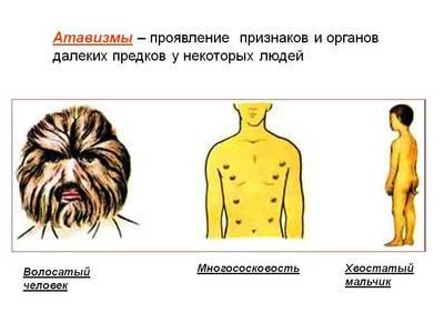 Доказательство эволюции: пример рудиментов у человека