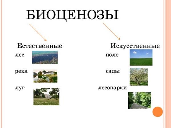 Что такое биоценоз