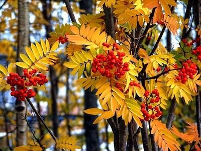 Описание осенней природы и настроения: сочинение миниатюра на тему осень