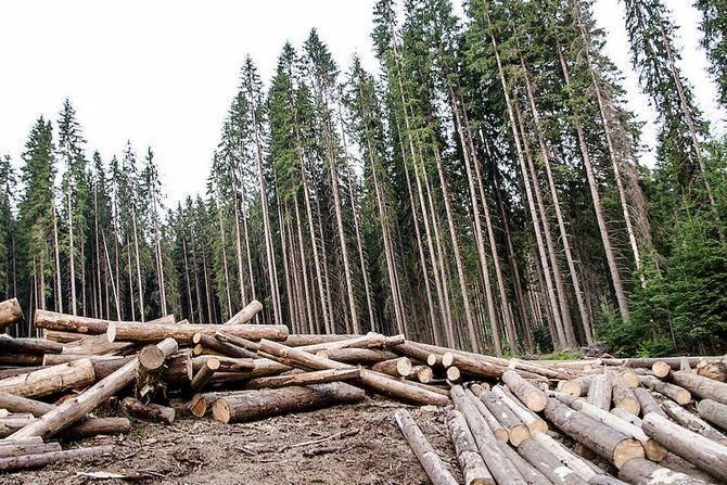 Вырубка деревьев вредит экологии