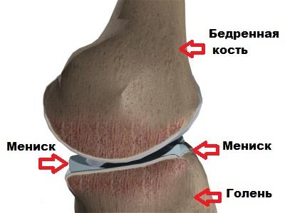 Изображение - Коленный сустав образуют kolennyj-sustav