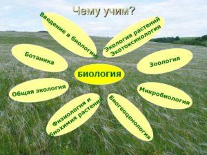 Что изучают биологические науки: список прикладных предметов