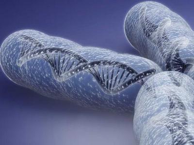 Какую роль в клетке выполняют хромосомы: строение и функции