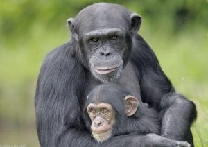 Самое умные животные