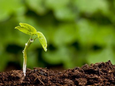 Закономерная цикличность: как происходит круговорот углерода в природе