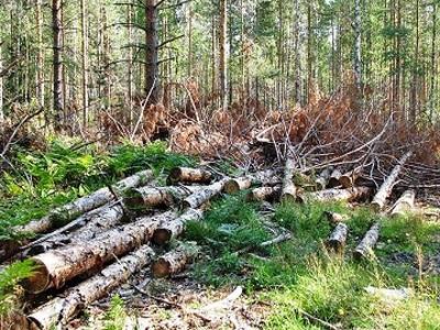 Как решаются проблемы экологии в современном мире на глобальном и региональном уровне