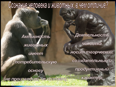 http://miludzivi.lv/wp-content/uploads/2015/06/animals-and-humans.png