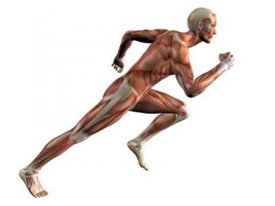 Как определяется средняя скорость человека при ходьбе и беге