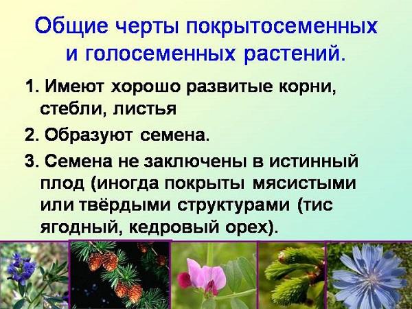 Общие черты растений
