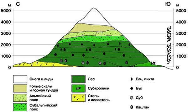 Природные зоны планеты